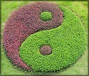 yin-yang natural